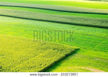 Lush Green Fields Aerial View
