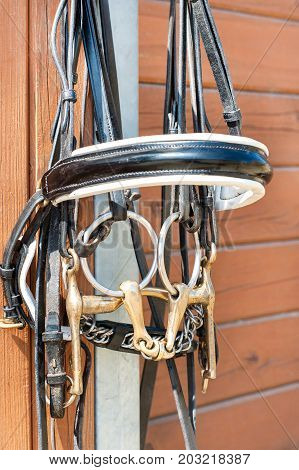 Horse bridle hanging on stable wooden door. Summertime closeup outdoors.