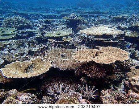 A wonder of nature example, maldives, atoll Kani