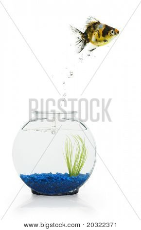 A goldfish leaping from a decorative fishbowl.