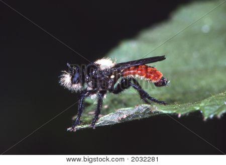 Beehunter