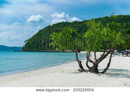 Lonely tree on the tropical white beach sand