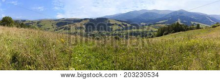 Mixed grass and field flowers on the slopes of the Carpathian Mountains. Panorama of the Carpathian summits in summer against the background of the blue sky and white clouds.