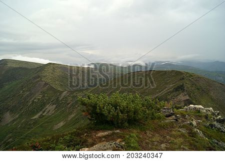 The crest of the mountain ridge Chamar-Daban (Eastern Siberia Pribaikalye Russia) with clouds on the tops on a cloudy day. General view from the top of the mountain. The slopes are covered with vegetation. A cedar in the foreground at the bottom.