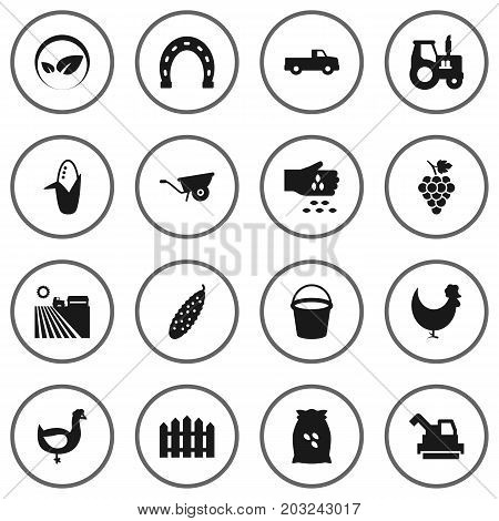 Collection Of Vineyard, Pushcart, Pail And Other Elements.  Set Of 16 Harvest Icons Set.
