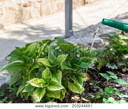 hand green watering can to garden natural plants
