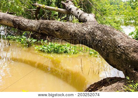 Tree topple on river look like wooden bench at riverside beautiful texture background