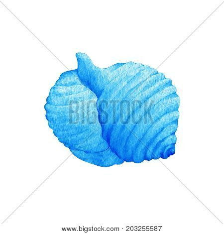 Illustrations of blue sea shells. Marine design. Hand drawn watercolor painting on white background.