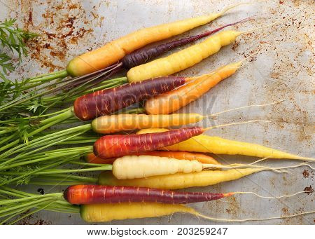 Colorful carrots on a gray metal background.