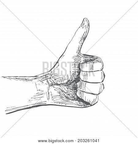 Hand gesture ok. Illustration in sketch style. Hand drawn vector illustrations.