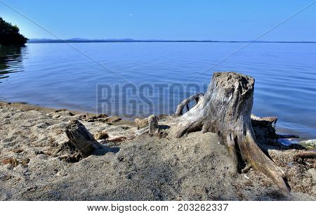 Old Dried Tree Stump On The Lake