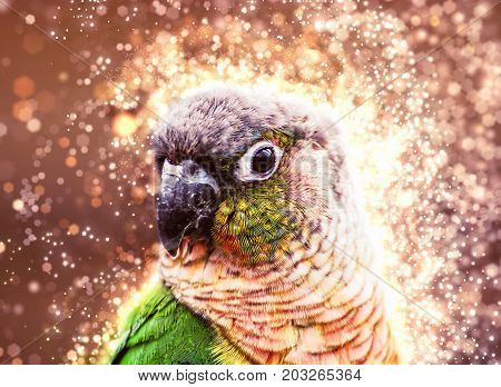 Portrait of beautiful colorful parrot with shimmering background. Beauty photo filter. Bird scene.