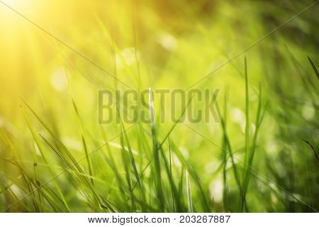 Natural abstract soft green summer eco sunny background with grass and light spots