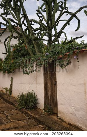 July 22 2017 Barichara Colombia: desert vegetation thriving in the colonial town with severe water shortage