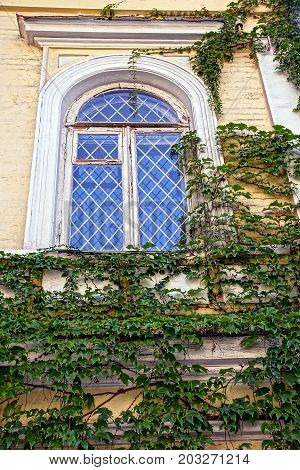 The old window with a lattice on the wall overgrown with green plants