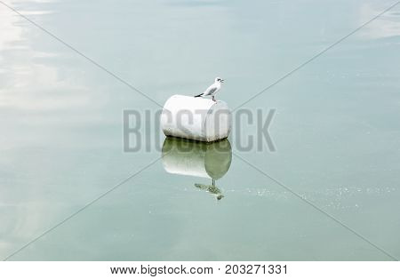 The seagull on the buoy. Natural scene.