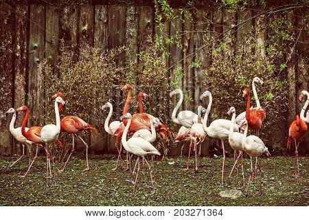 Colony of flamingos. Animal scene. Yellow photo filter. Wading birds. Beauty in nature.