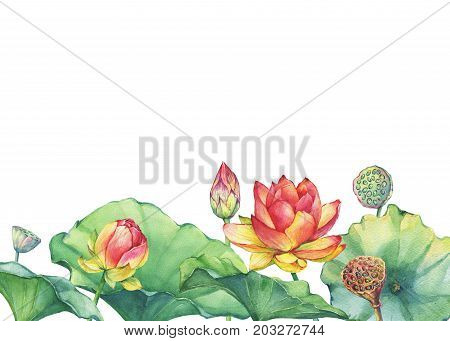 Border, poster of pink lotus flower with leaves, seed head, bud (water lily, Indian lotus, sacred lotus, Egyptian lotus). Watercolor hand drawn painting illustration isolated on white background.