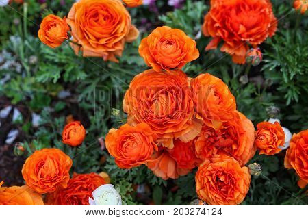 Close up of beautiful bright orange flowers