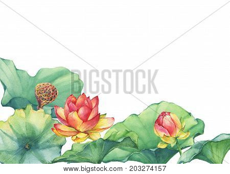 Poster, composition of pink lotus flower with leaves, seed head, bud (water lily, Indian lotus, sacred lotus, Egyptian lotus). Watercolor hand drawn painting illustration isolated on white background.