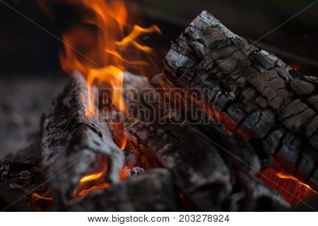 Bonfire. Fire wood. Grilling and cooking fire. Woodfire with flames. Making fire.