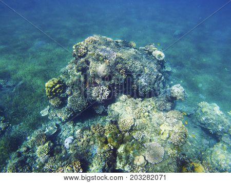 Tropical seashore underwater landscape. Coral reef in warm sea. Coral reef underwater photo. Snorkeling or diving undersea banner template. Seaside summer vacation activity. Marine aquarium background