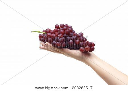 Female hand holding purple seedless grapes isolated