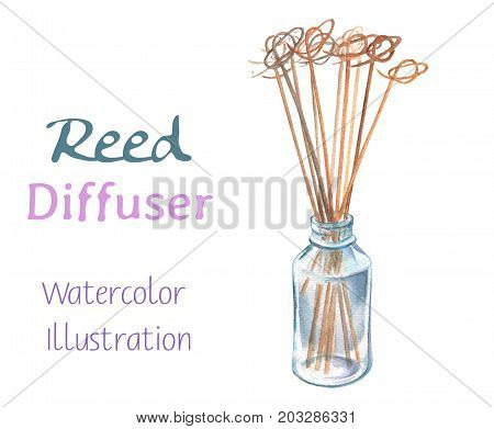 Reed diffuser and scented stick watercolor painting. Scent diffuser handdrawn illustration. Scented stick in glass bottle. Aromatic stick. Relax and wellness decor. Home fragrance. Spa salon clipart