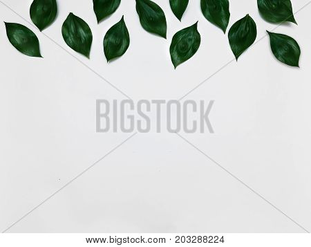 Minimalist plant background Bright green leaves are lying on a white background Flat lay Modern minimalistic mockup with empty space