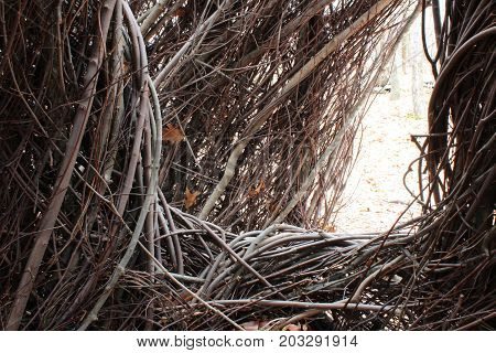 Passage opening through tangled branches, close view