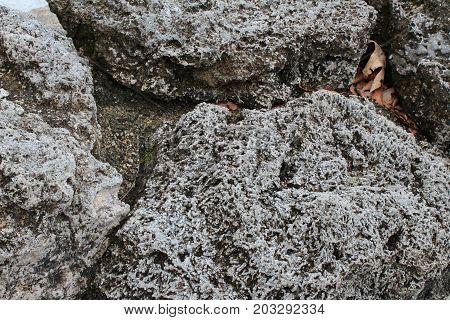Porous grey volcanic rocks background, close view