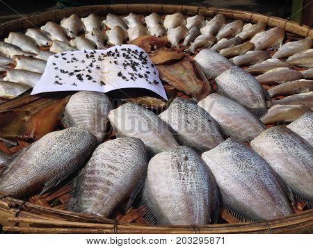 A Trichogaster pectoralis Local Good Thai Food