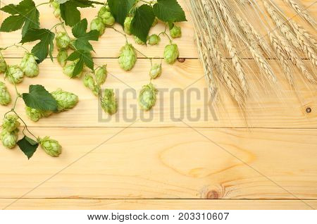 Beer Brewing Ingredients Hop Cones And Wheat Ears On Light Wooden Table. Beer Brewery Concept. Beer