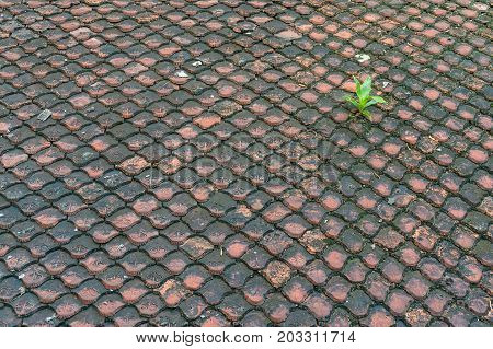 Old And Dirty Roof Tiles Pattern