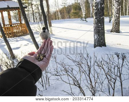 The Titmouse Which Sat Down On A Hand.