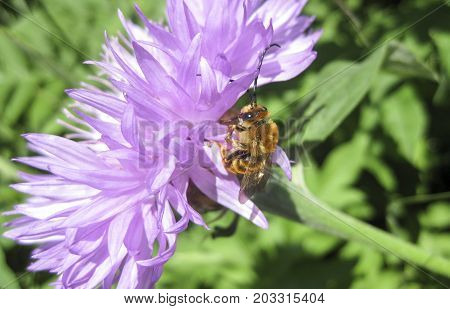 The Bees Pollinating Flowers