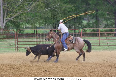 The Healer At The Roping