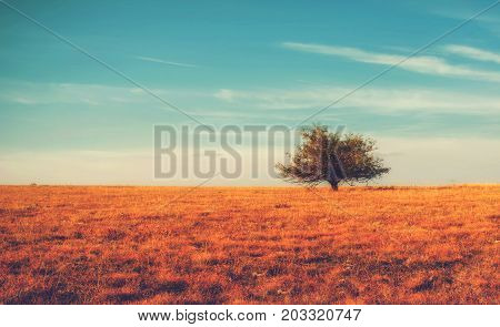 Lonely tree on yellow meadow an mountain landscape with clouds. Autumn bright background.