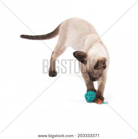 Young Siamese cat playing with a green ball, on white background