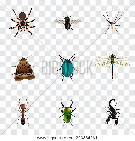 Realistic Butterfly, Insect, Emmet And Other Vector Elements