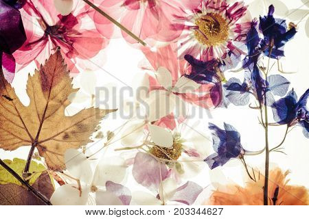floristic background