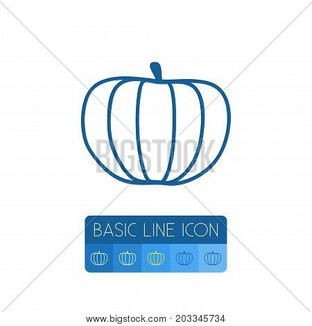 Zucchini Vector Element Can Be Used For Gourd, Pumpkin, Squash Design Concept.  Isolated Squash Outline.