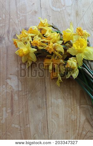 Wilted yellow daffodil flowers on a wooden table, vertical view