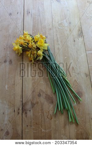 Wilted cut daffodils on a wood table top, viewed from overhead