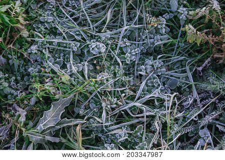 Hoar-frost on the grass view from above. Grass covered with morning rime. Floral background