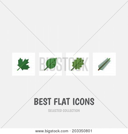 Flat Icon Natural Set Of Alder, Spruce Leaves, Oaken And Other Vector Objects