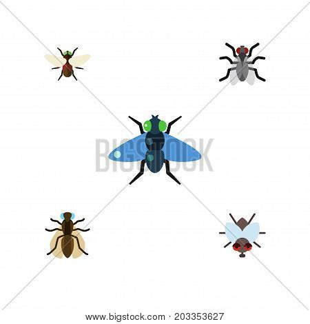 Flat Icon Housefly Set Of Gnat, Dung, Mosquito And Other Vector Objects