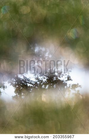 Tree Reflected In Water Of Marshy Field. Shallow Depth Of Field.