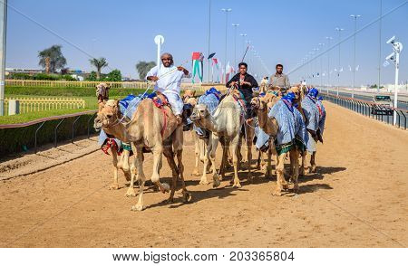 Dubai, United Arab Emirates - March 25, 2016: Practicing for camel racing at Dubai Camel Racing Club, Al Marmoom, UAE
