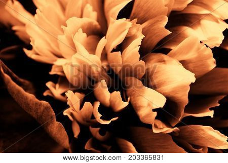 Abstract Autumn Design Orange Floral Background with Season Colors, Abstract Gold Fall Decoration Concept